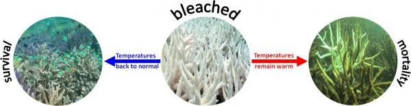coral bleaching essay Coral reefs essaysas many know, coral reefs are a type of underwater environments on the contrary to what most people may think though, coral reefs are made up of.